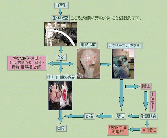 三重県|松阪食肉衛生検査所:BSE検査とは